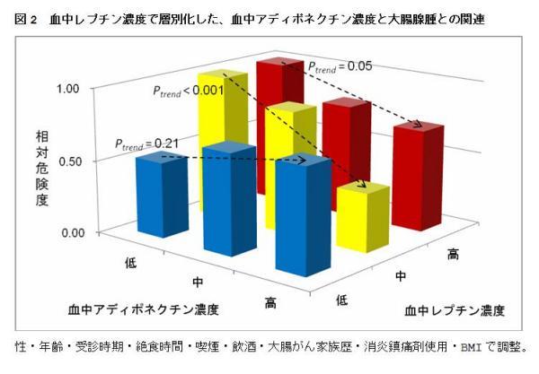 図2 血中レプチン濃度で層別化した、血中アディポネクチン濃度と大腸腺腫との関連