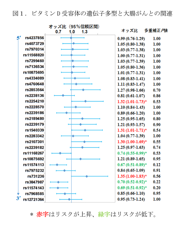 図1.ビタミンD受容体の遺伝子多型と大腸がんとの関連